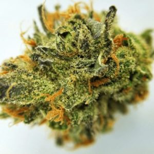 Buy Electric Lemon G Marijuana